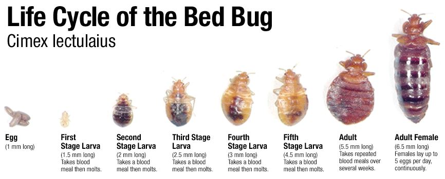 How To Get Rid Of Bed Bug Bite Marks Fast