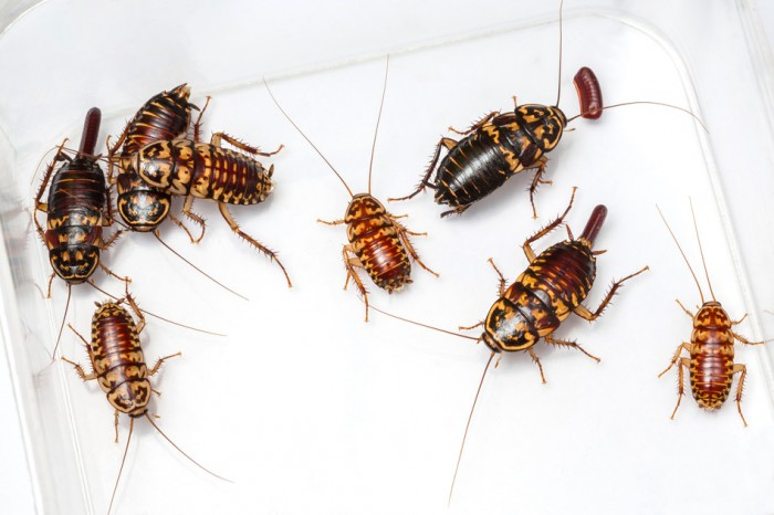 How To Get Rid Of The Cockroaches In Bathroom Baby Cockroaches In - Baby roaches in bathroom