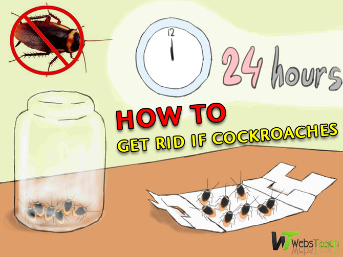 How to get rid of the cockroaches forever ?