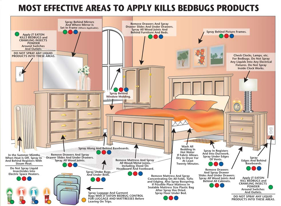 What to do after your first bed bug treatment before and for How do i prevent bed bugs