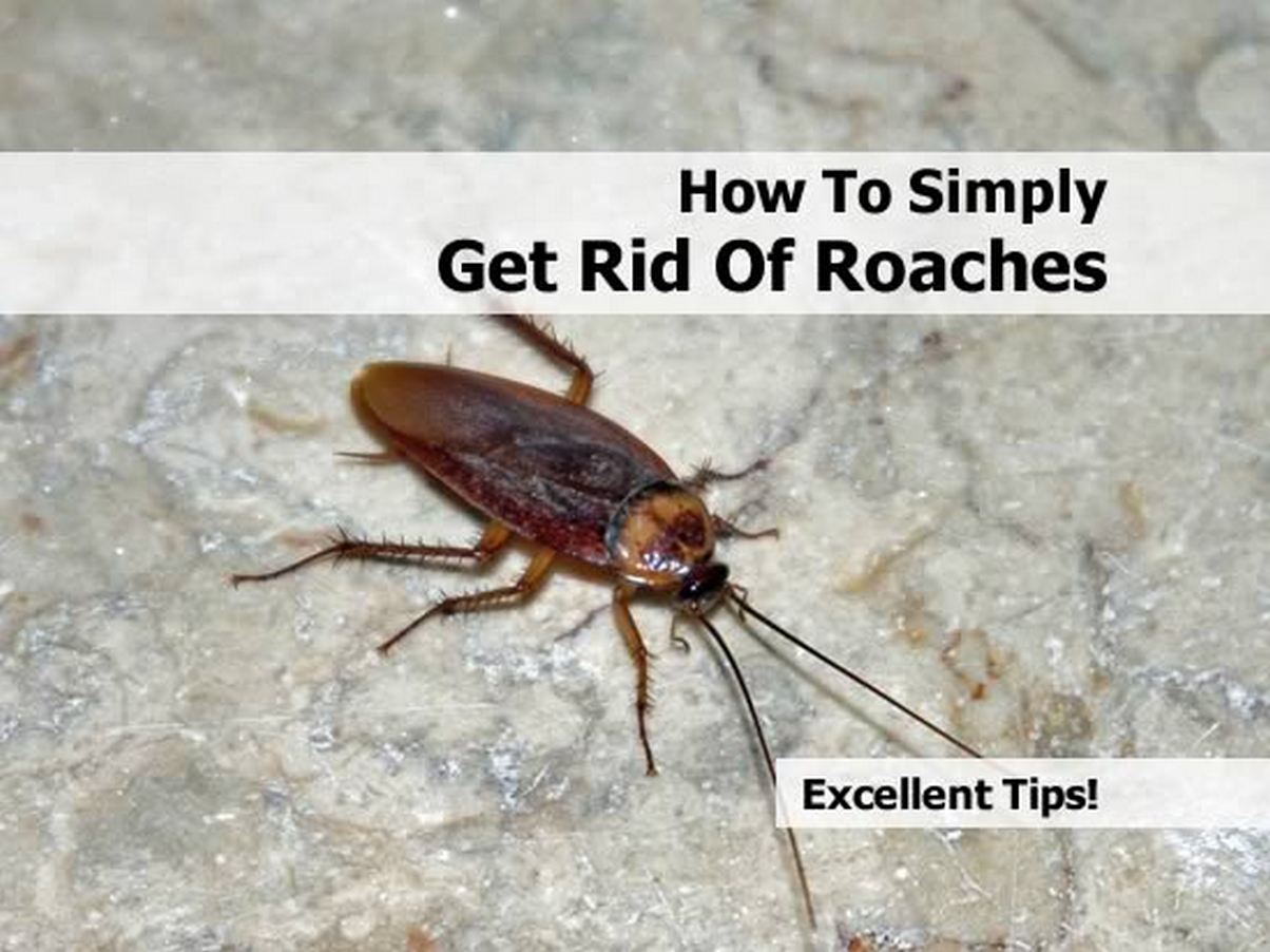Best Way To Get Rid Of Cockroaches In The Kitchen