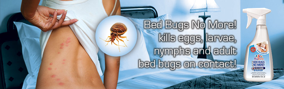 What is the most effective bed bugs insecticide